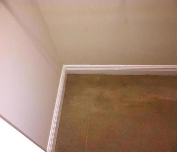 Mold Damage - Belleair Bluffs Home After