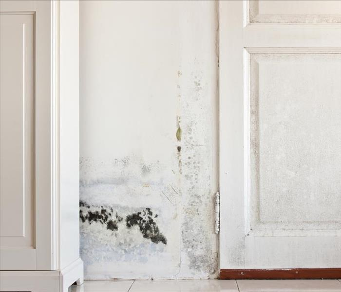Mold Remediation Belleair Beach Mold Damage and How to Avoid It