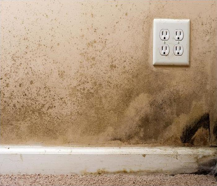 Mold Remediation Getting The Steps In The Right Order To Remedy Mold Damage In Bellaire Beach