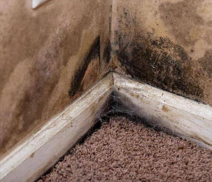 Mold Remediation Overcoming Mold Damage in Your Largo Home