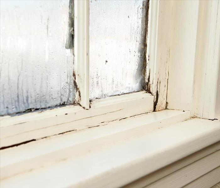 Mold Growth In The Basement Can Cause Mold Damage In