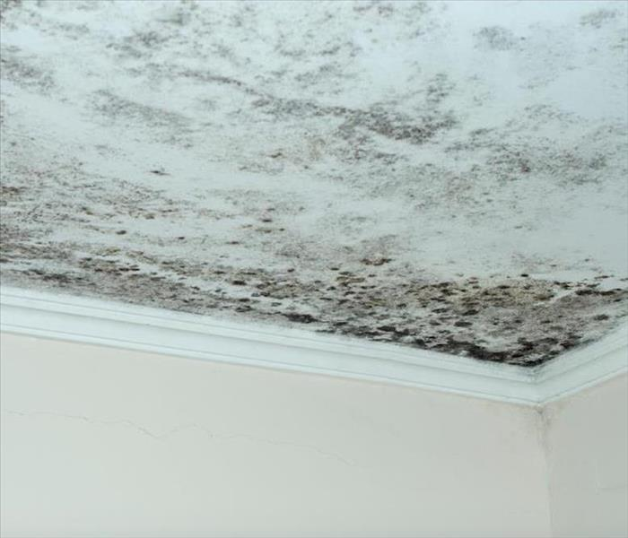extensive mold patches on a ceiling
