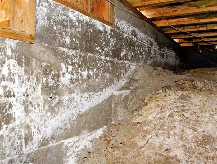 A crawl space with white mold.