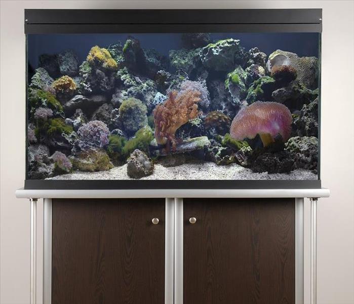 Water Damage Water Damage from Indian Rocks Beach Home Aquariums